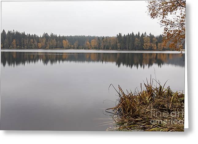 Nature Reserve Kladska Peats Greeting Card by Michal Boubin