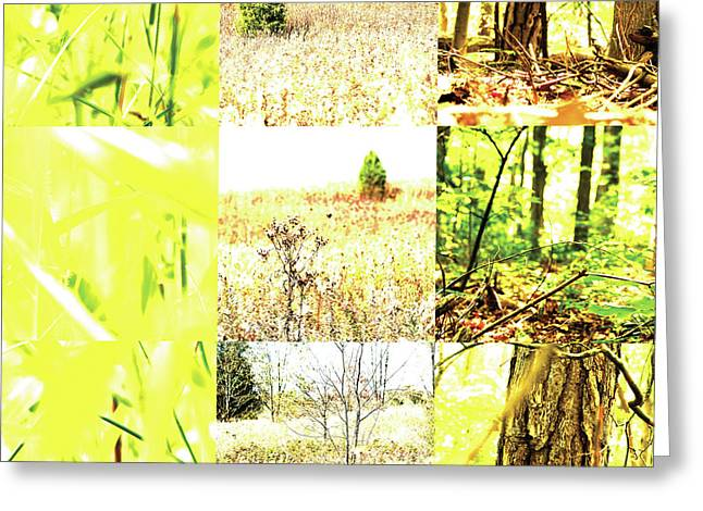 Nature Scape 015 Greeting Card by Robert Glover