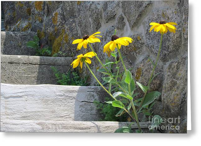Stepping Stones Greeting Cards - Nature Steps It Up Greeting Card by Lori Pessin Lafargue