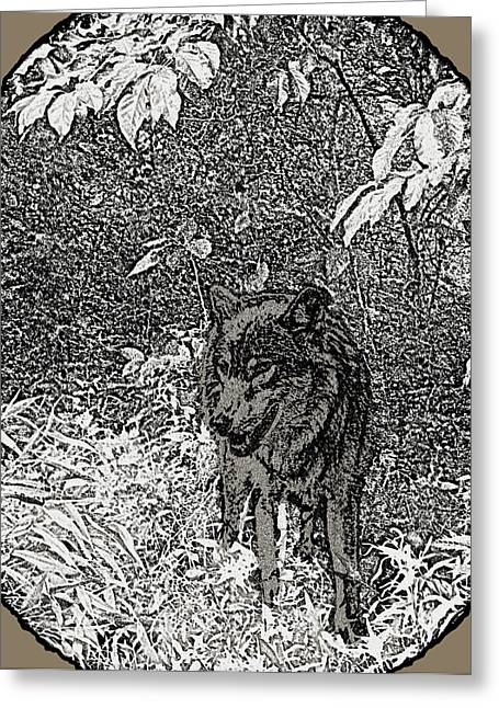 Wolf From The Forest Greeting Cards - Nature Walk Wolf Greeting Card by Debra     Vatalaro