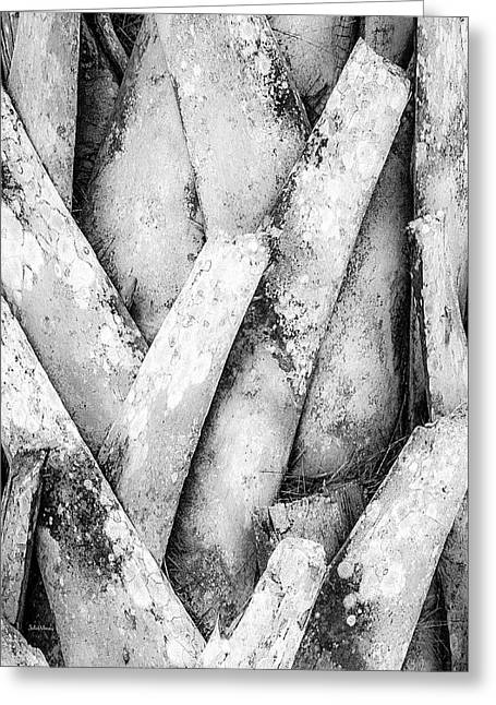Natures Abstract Black And White Greeting Card by Julie Palencia