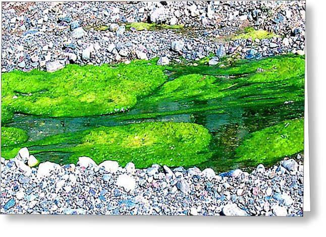 Alga Greeting Cards - Natures Abstract - pond of Algae Greeting Card by Merton Allen