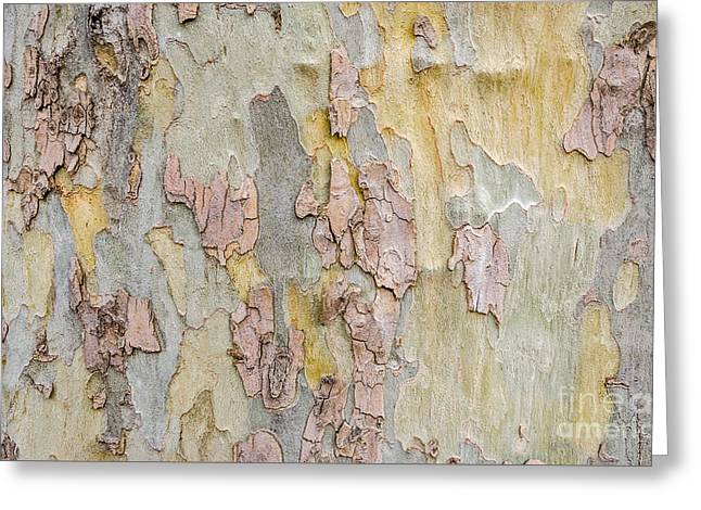 Nature's Abstract Greeting Card by Sue Smith