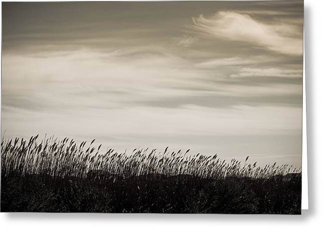 Sea Oats Greeting Cards - Natures Beauty Greeting Card by Colleen Kammerer