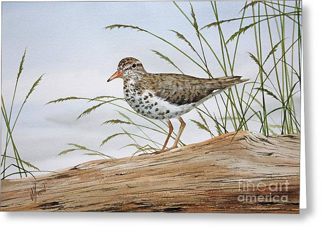 Shore Bird Print Greeting Cards - Natures Delicate Beauty Greeting Card by James Williamson