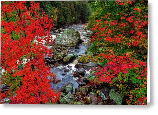 Natures Frame Greeting Card by Mark Papke