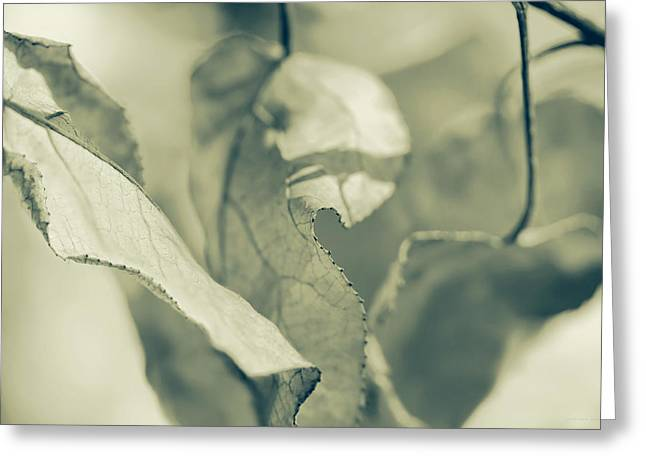 Nature's Leaves Abstract Green Greeting Card by Jennie Marie Schell