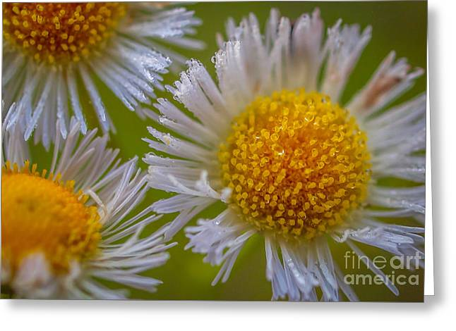 Nature's Natural Bouquet Greeting Card by Tom Claud