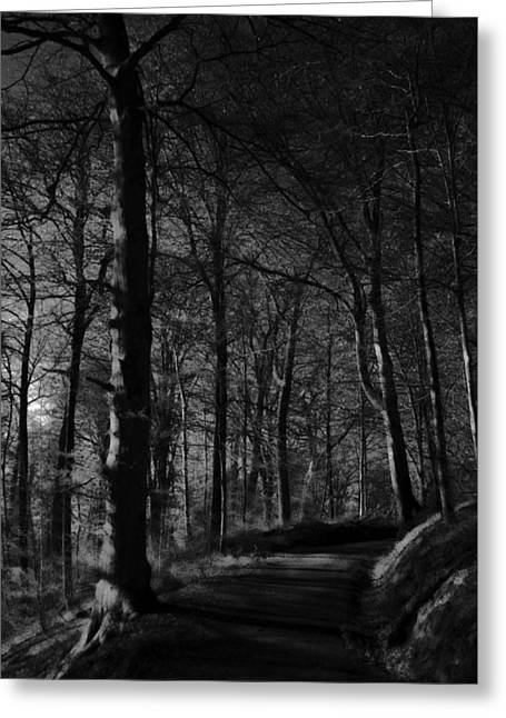 Stein Greeting Cards - Natures Path Greeting Card by Miguel Winterpacht