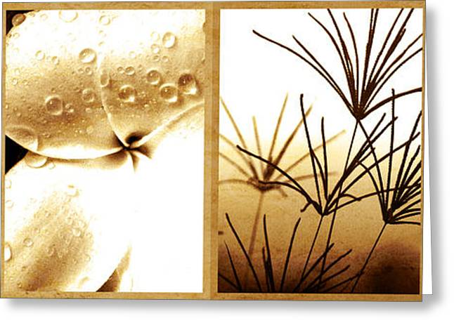 Nature's Window Greeting Card by Holly Kempe