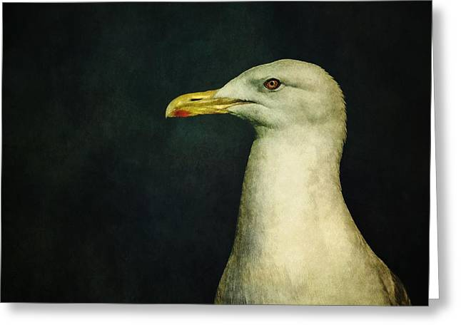 White Bird Greeting Cards - Naujaq Greeting Card by Priska Wettstein