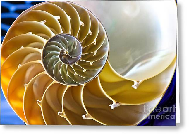 Nautilus  Greeting Card by Colleen Kammerer