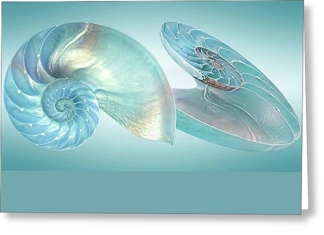 Geometric work Photographs Greeting Cards - Nautilus Jewel Of The Sea Greeting Card by Gill Billington