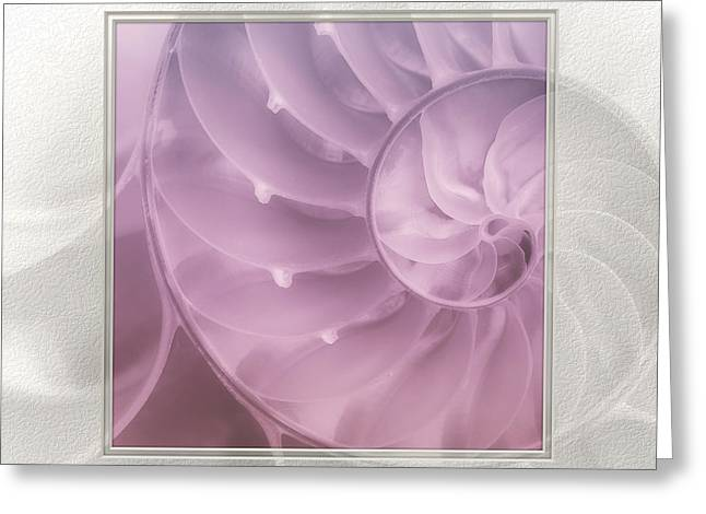 Nautilus Matted Greeting Card by Tom Mc Nemar