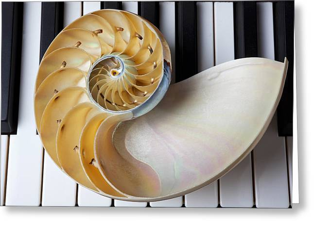 Playing Musical Instruments Greeting Cards - Nautilus shell on piano keys Greeting Card by Garry Gay