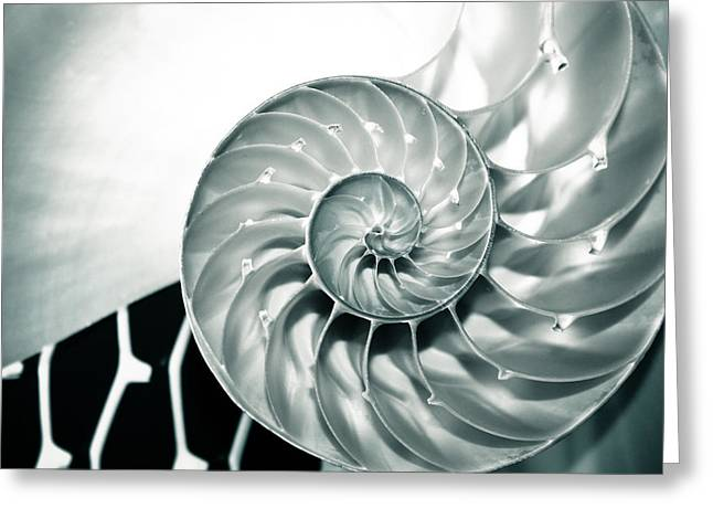 Shell Pattern Greeting Cards - Nautilus Wave Greeting Card by Colleen Kammerer