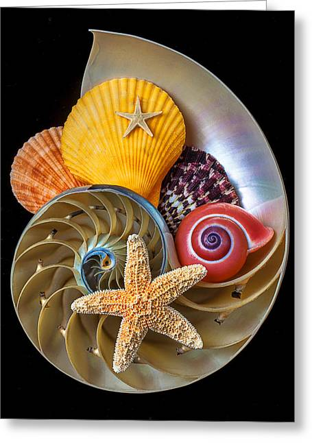 Mollusk Greeting Cards - Nautilus with sea shells Greeting Card by Garry Gay