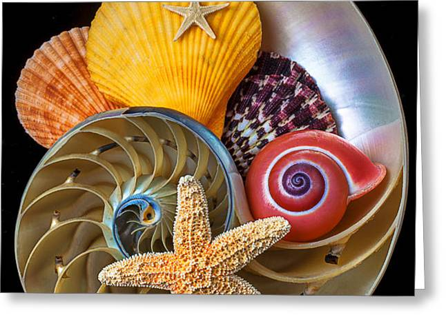 Nautilus with sea shells Greeting Card by Garry Gay