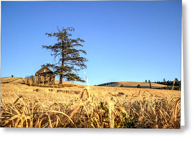 Outbuildings Greeting Cards - Near Culdesac Idaho Greeting Card by Brad Stinson