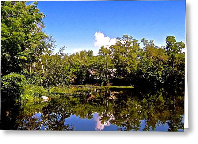 Reflection In Water Greeting Cards - Near the Waters Edge Greeting Card by Elizabeth Tillar