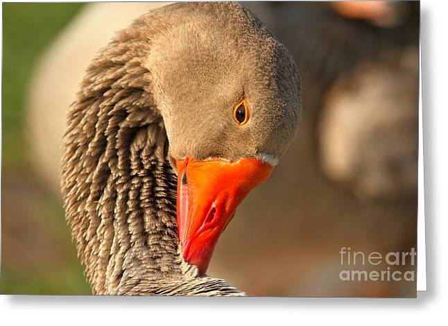 Neck Cleaning Greeting Card by Adam Jewell