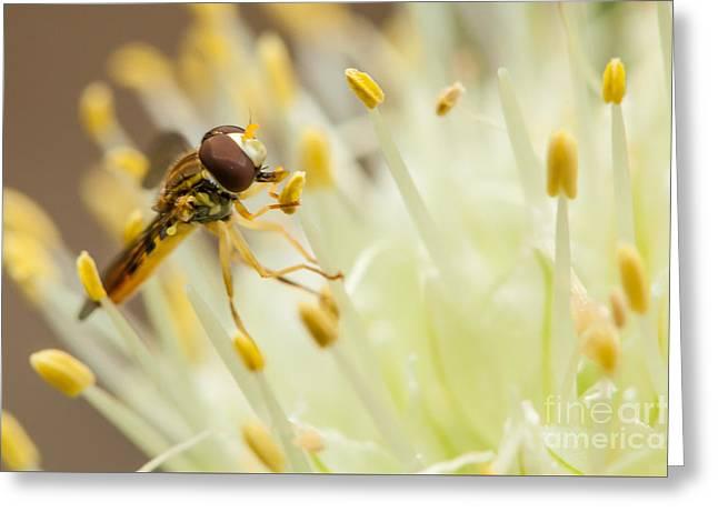 Biology Greeting Cards - Nectar Harvest Greeting Card by Kenton Wandasan
