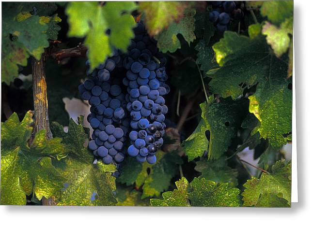 Grapevines Greeting Cards - Nectar of the Gods Greeting Card by Robert  Torkomian