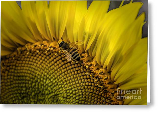 Close Focus Floral Greeting Cards - Nectar Of The Sun Greeting Card by Janice Rae Pariza