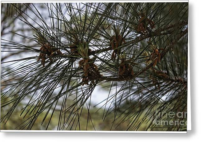 Needles Attached Greeting Card by Roberta Byram