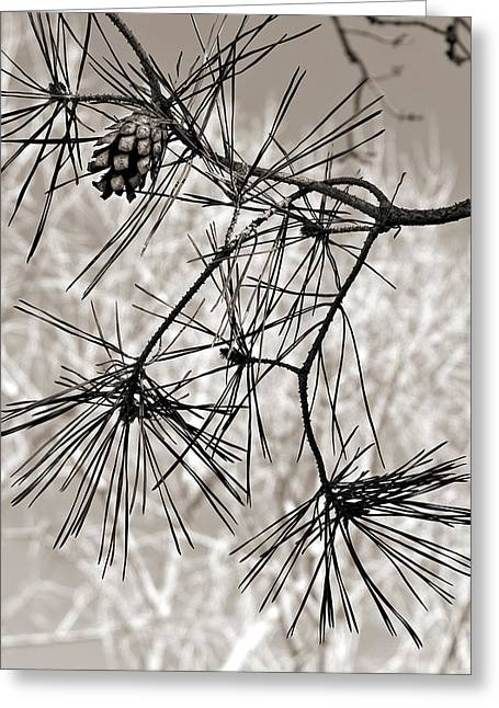 Pine Needles Greeting Cards - Needles Everywhere Greeting Card by Marilyn Hunt