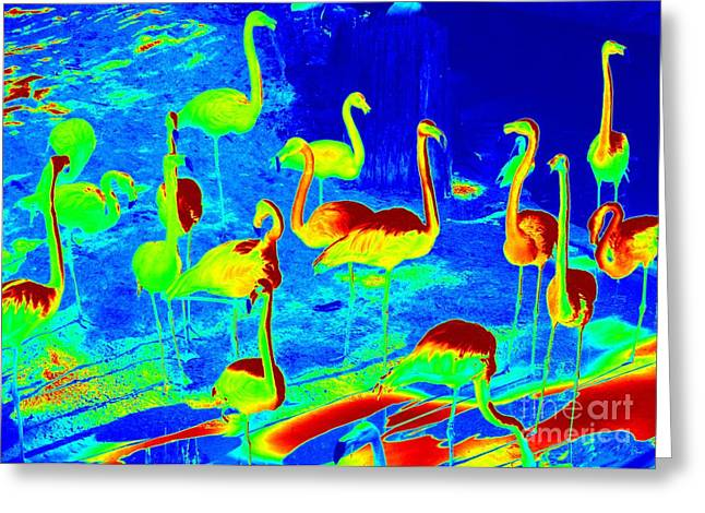 Brightly Colored Greeting Cards - Neon Flamingos Greeting Card by Carol Groenen
