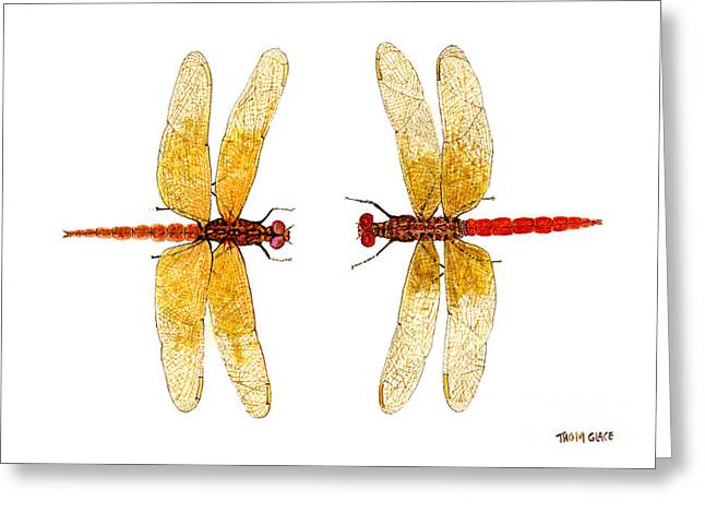 Thom Glace Greeting Cards - Neon Skimmer and Flame Skimmer Greeting Card by Thom Glace