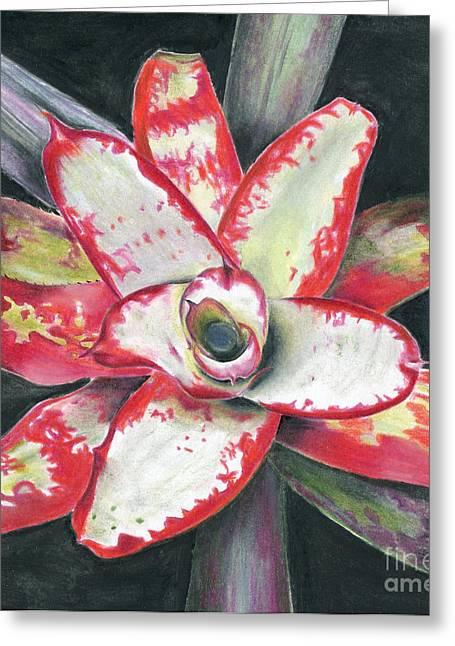 Neoregelia Paintings Greeting Cards - Neoregelia Blastoff Greeting Card by Penrith Goff