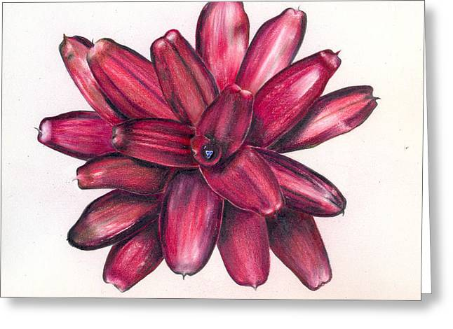 Neoregelia Christmas Cheer Greeting Card by Penrith Goff