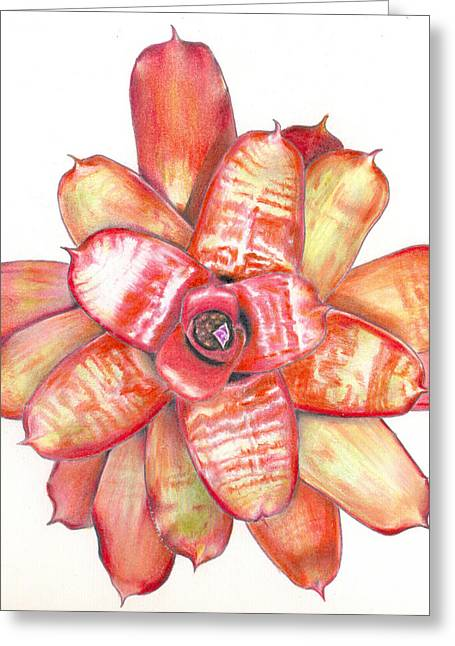 Bromeliad Greeting Cards - Neoregelia Small Wonder Greeting Card by Penrith Goff