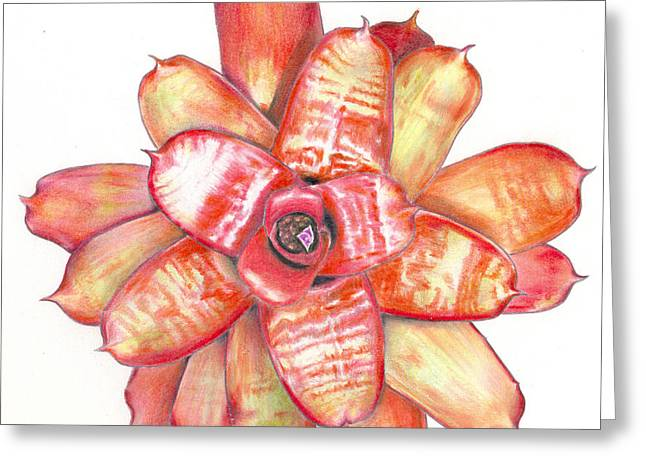 Neoregelia Small Wonder Greeting Card by Penrith Goff