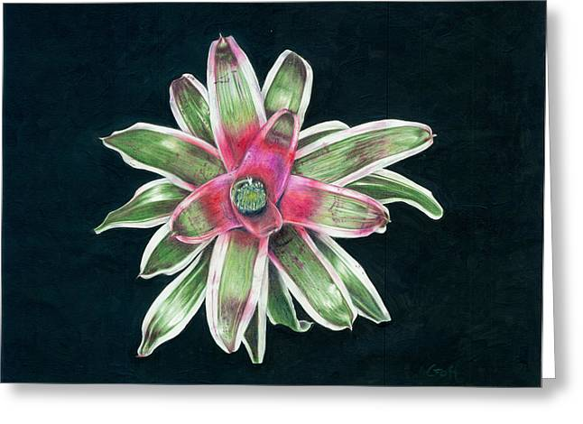 Bromeliad Neoregelia Greeting Cards - Neoregelia Terry Bert Greeting Card by Penrith Goff