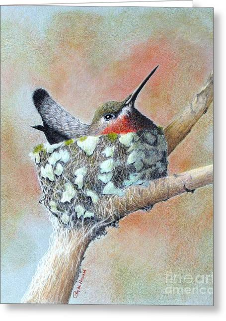 Nesting Anna Greeting Card by Phyllis Howard