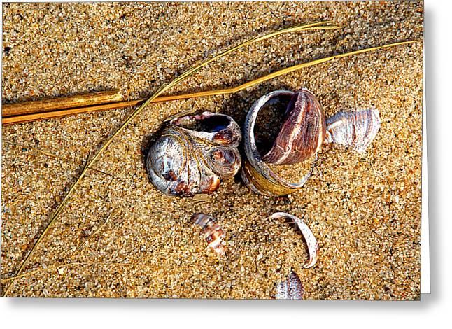 Nestled In The Sand Greeting Card by Lynda Lehmann