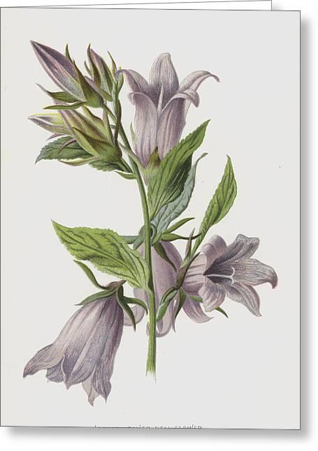 Nettle-leaved Bell-flower Greeting Card by Frederick Edward Hulme