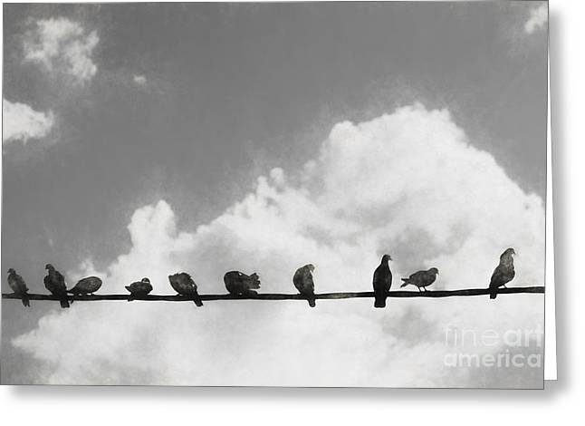 Network Of The Bird Line  Greeting Card by Jorgo Photography - Wall Art Gallery