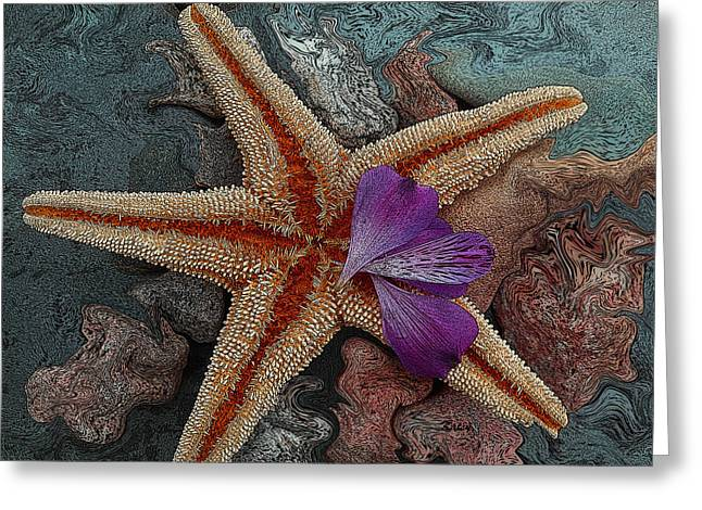 Sea Shell Digital Paintings Greeting Cards - Never Forgotten- starfish art Greeting Card by Kathy  Symonds