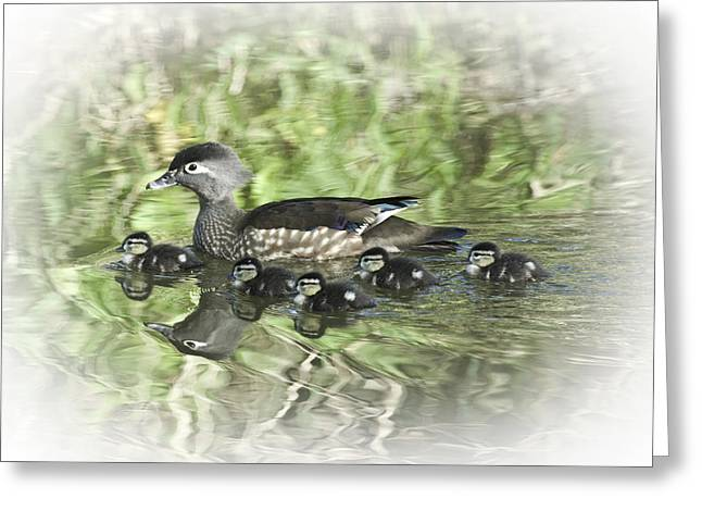 Duck Greeting Cards - New Beginnings  2 Greeting Card by Rob Mclean