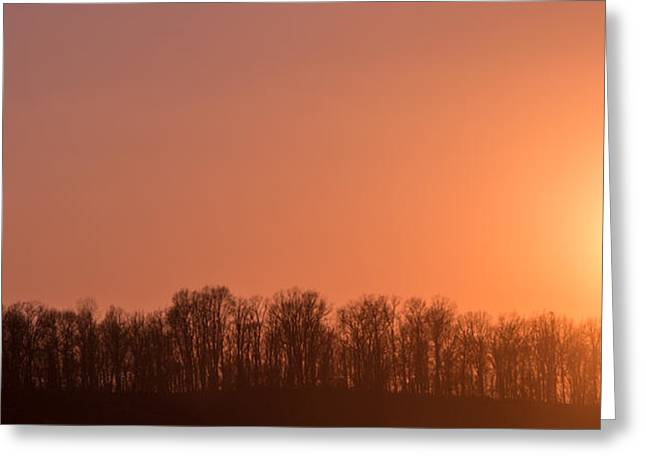 Bare Trees Greeting Cards - New Beginnings Greeting Card by Parker Cunningham