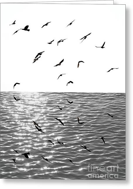 Flying Seagull Greeting Cards - New Destination Greeting Card by Marcia Lee Jones