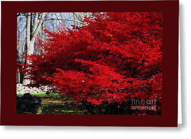 New England Glory Greeting Card by Poet's Eye