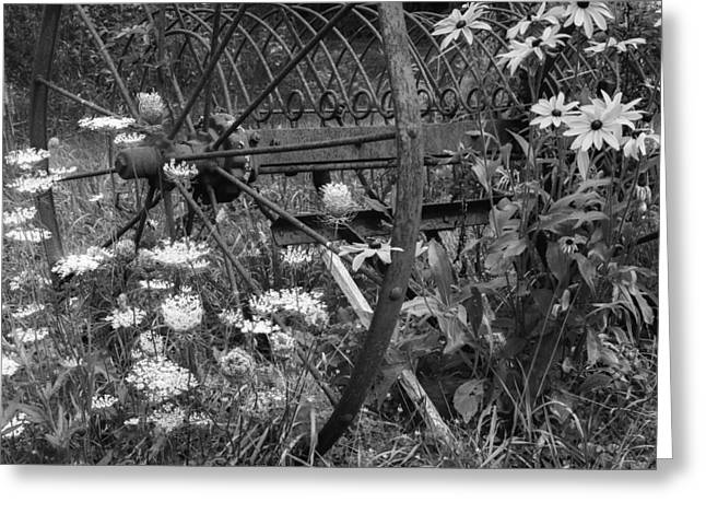 New England Summer Wild Flowers Bw Greeting Card by Bill Wakeley