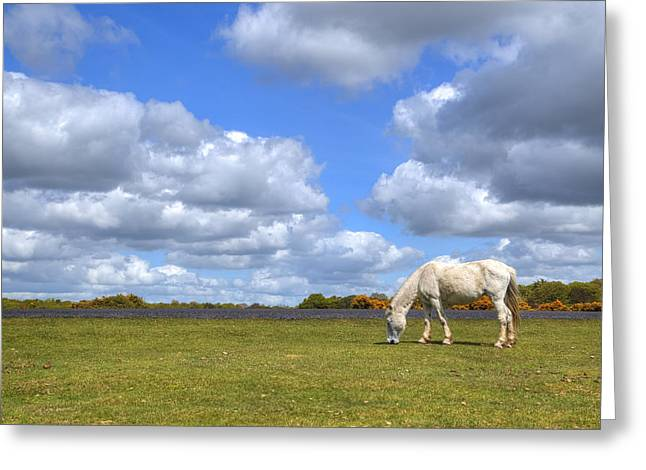 Pony Greeting Cards - New Forest - Hampshire - UK Greeting Card by Joana Kruse