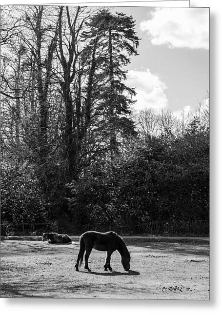 New Forest Silhouette Greeting Card by Hazy Apple
