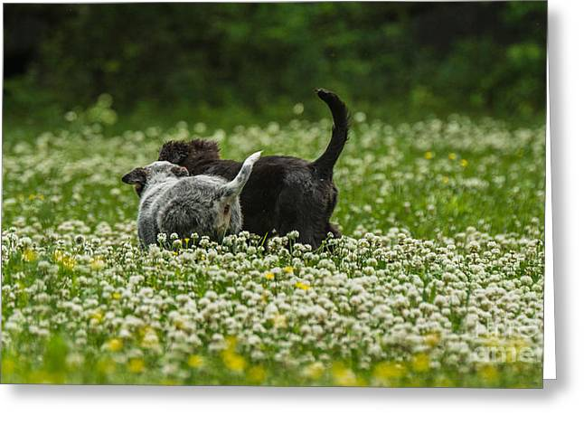 Puppies Tapestries - Textiles Greeting Cards - New friends Greeting Card by James Hennis